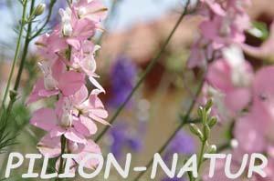 Pilion-Natur